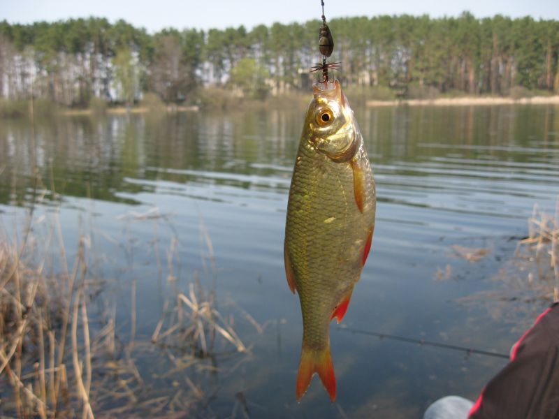 какую рыбу можно ловить на ультралайт