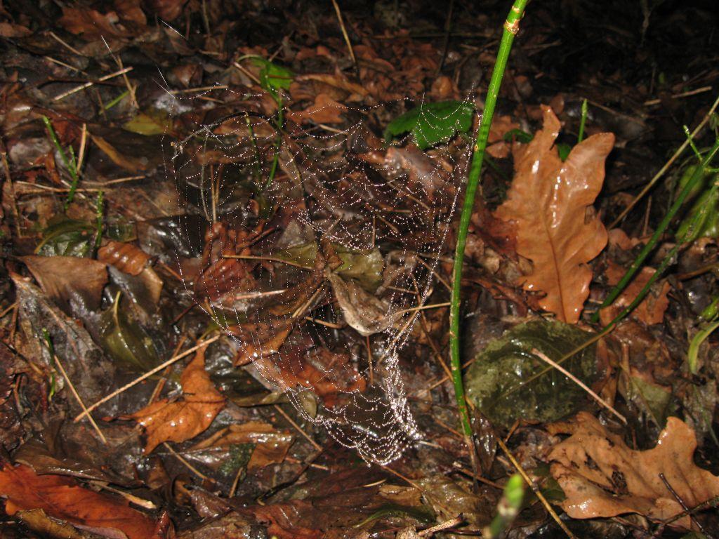 Капли дождя на паутине